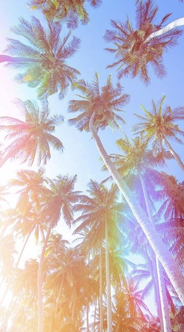 Fond d'écran été palmier